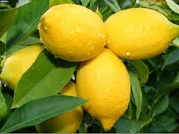 لیمو سنگی